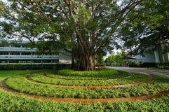 Stort träd som omges med gräs i rund modell Arkivfoto