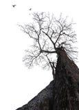 Stort trädbegrepp för död Arkivfoto