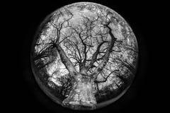 Stort träd Royaltyfri Bild