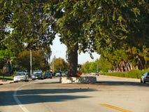 Stort träd i mitt av vägen Arkivbild