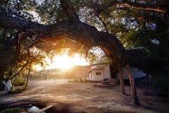 Stort träd- och landshus Arkivbilder