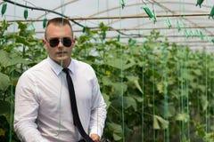 Stort växtväxthus Stolt man, modern affärsman i hans växthus och känsligt förtroende royaltyfri foto
