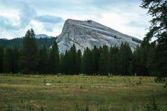 Stort vagga klättringgranitmonoliten i Yosemite nationalparkcarlifornia royaltyfri foto