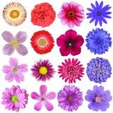 Stort val av isolerade färgrika blommor Arkivfoton