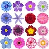 Stort val av isolerade färgrika blommor Arkivfoto