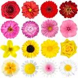 Stort val av olika blommor som isoleras på White Arkivbild