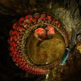 Stort vin skorrar i grottan Royaltyfri Foto