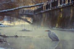 Stort vitt ägretthägeranseende i en frysa flod royaltyfri fotografi