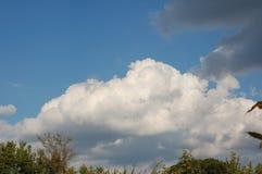 Stort vitt moln i mittskott ovanför trän royaltyfri fotografi
