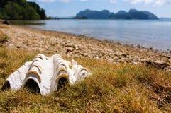 Stort vitt snäckskal på gammalt skal för härlig seacoast på havet och tropisk öbakgrund tropisk natur tropisk liggande arkivbild