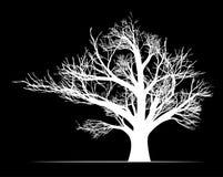 Stort vitt träd på svart bakgrund Arkivfoton