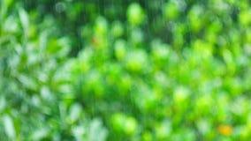 Stortbui op de tropische regenwoudbomen vage achtergrond stock footage