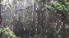 Stortbui op installaties en bomen in de herfst stock video