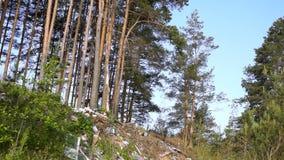Stortplaatshuisvuil in bos stock footage