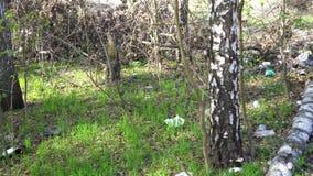 Stortplaatshuisvuil in het bos, milieuvervuiling, zonnige de zomerweide stock video