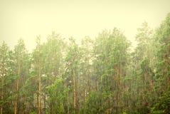 Stortvloeden van regen in bos Royalty-vrije Stock Afbeelding