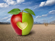 Story of the apples Royalty Free Stock Photography