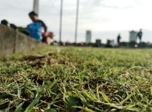 Story of grass. Stock Image