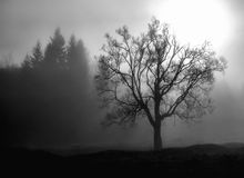 Story of a lonely tree. A lonely tree, over the Sipoaia Valley, in a foggy morning of november Royalty Free Stock Photo