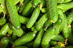 Stos świeży zielony ogórek Zdjęcie Stock