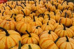 Stos żniwo pomarańcze banie Fotografia Stock
