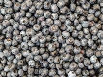 Stos Amerykańskie czarne jagody fotografia stock