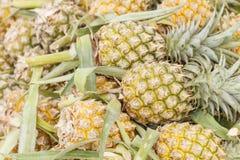 Stos ananas obraz royalty free