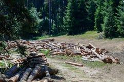 Stos bele zbliża drewnianego tnącego teren zdjęcia royalty free