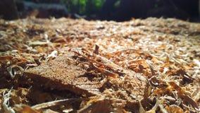 Stos brown drewno na jardzie zdjęcie royalty free