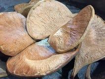 Stos ciężki wysuszony grzyb Zdjęcia Royalty Free