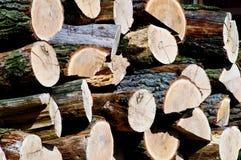 Stos dębowy drewno Obraz Stock