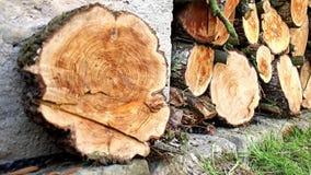 Stos drewna w domowym magazynie zdjęcie wideo