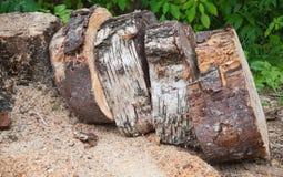 Stos drewniani chumps Fotografia Stock