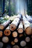 Stos drewno obraz stock