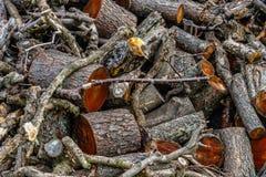 Stos drewno, gałąź lub bela, zdjęcie stock