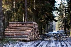 Stos drewno układał lasową drogą Brogujący drewno jest wa zdjęcie stock
