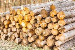 Stos drewno w lesie przy zmierzchem Obraz Royalty Free