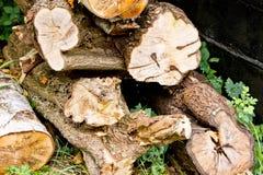 Stos drzewni bagażniki w drewnie Obraz Stock