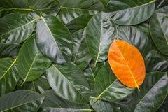 Stos drzewny urlop Różny żółty urlop na ciemnozielonych liściach Zdjęcie Royalty Free