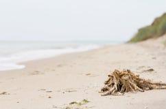 Stos gałęzatka po deszczu na piaskowatej plaży Zdjęcia Stock