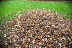 Stos jesienni liście na polu Zdjęcia Royalty Free
