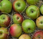 Stos kolorowi organicznie jabłka podczas żniwo czasu przygotowywa dla klientów Obraz Royalty Free