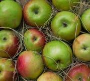 Stos kolorowi organicznie jabłka podczas żniwo czasu przygotowywa dla klientów Zdjęcia Stock