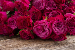 Stos mauve róże Obrazy Royalty Free