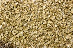 Stos oatmeal płatki zdjęcie stock