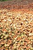Stos odrzucać kokosowe plewy obraz royalty free