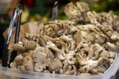 Stos ostrygowe pieczarki w pokazie przy rynkiem zdjęcia stock