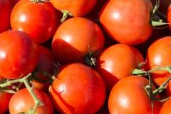 Stos pomidor Zdjęcie Stock