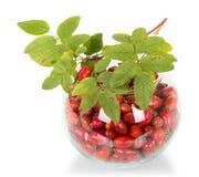 Stos różani biodra w round szklanym pucharze gałąź z liśćmi odizolowywającymi na bielu i obrazy royalty free