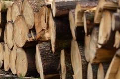 Stos rżnięci drzewni bagażniki Zdjęcia Royalty Free